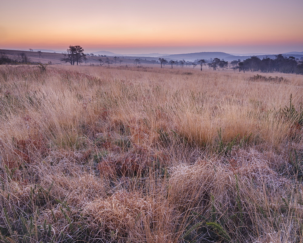 Winter twilight on the grassy heathland of Woodbury Common, near Exmouth, Devon, UK - 1295-170