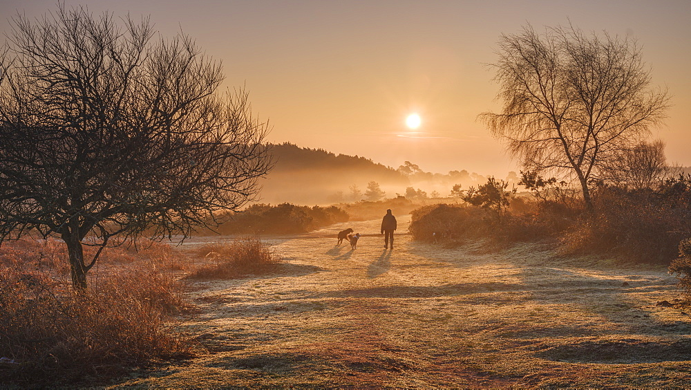Winter sunrise dog walk in the mist on the heathland of Woodbury Common, near Exmouth, Devon, England, United Kingdom, Europe