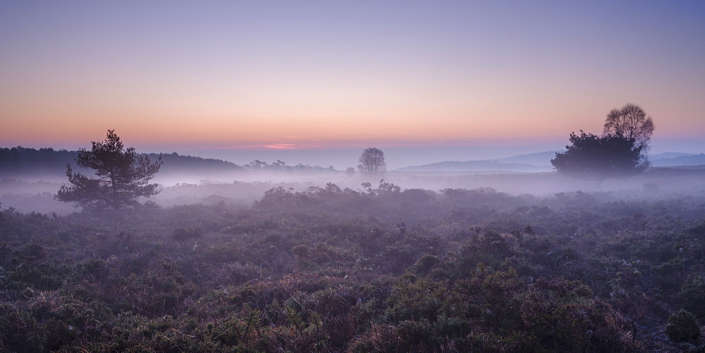 Winter twilight with mist on the heathland of Woodbury Common, near Exmouth, Devon, England, United Kingdom, Europe