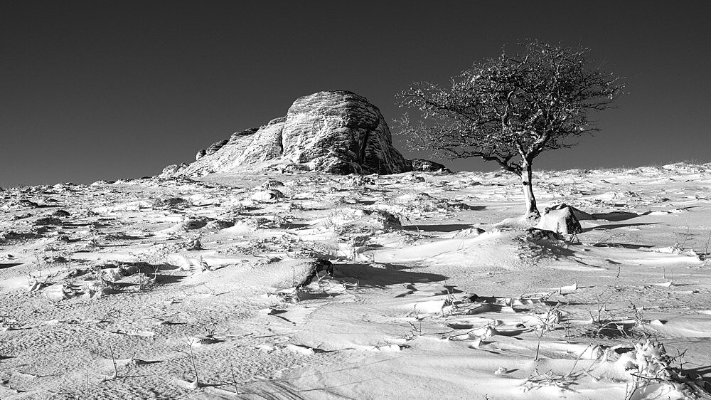 Hawthorn and Haytor Rocks in snow - Haytor, Bovey Tracey, Devon UK - 1295-183
