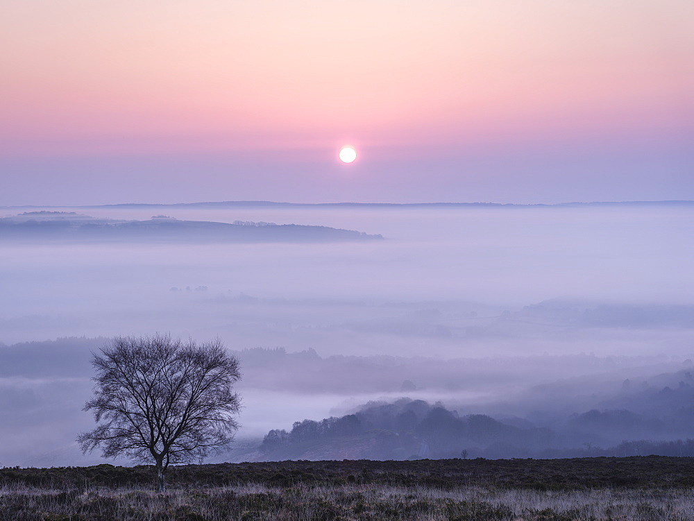 A soft and misty sunrise over Yarner Wood, Dartmoor National Park, Bovey Tracey, Devon, England, United Kingdom, Europe - 1295-209
