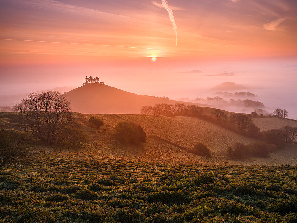 Misty sunrise over the distinctive pine topped Colmer's Hill near Bridport, Dorset, UK - 1295-221