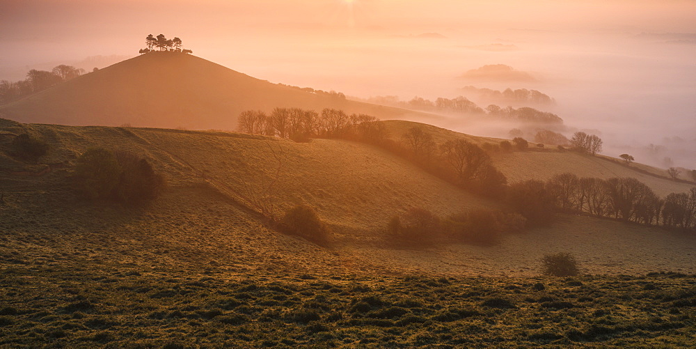 Misty sunrise over the distinctive pine topped Colmer's Hill near Bridport, Dorset, England, United Kingdom, Europe - 1295-222