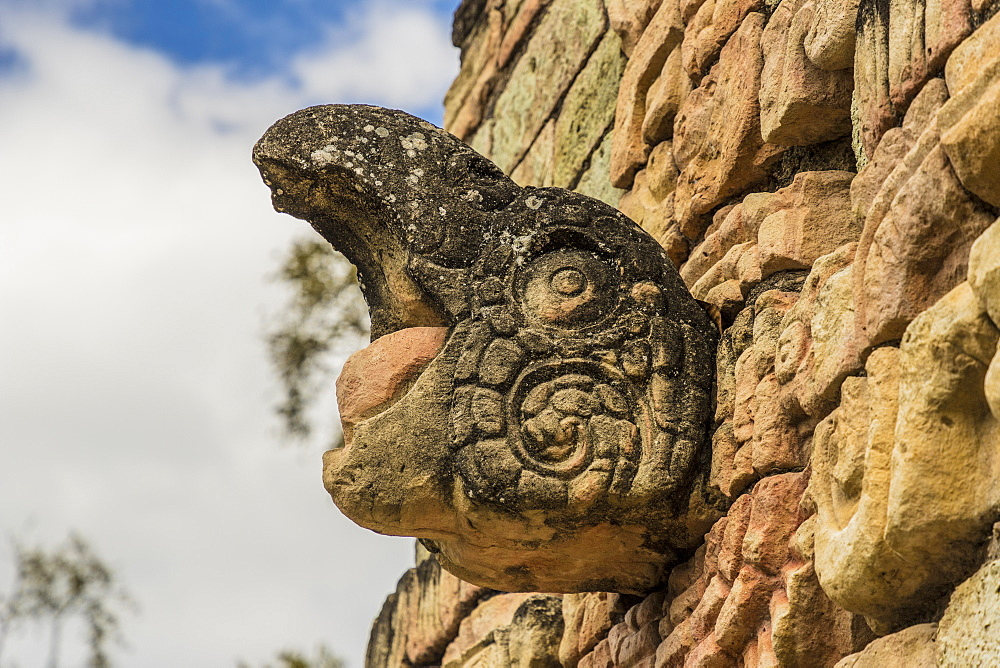 The screaming Macaw on Ball Court in Copan Ruins, UNESCO World Heritage Site, Copan, Honduras, Central America - 1297-143
