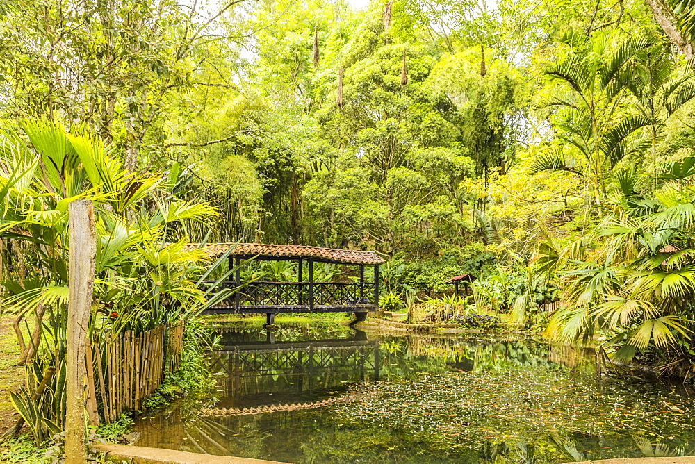 The pond inside Los balsos botanical gardens in Jerico, Antioquia Colombia, South America.