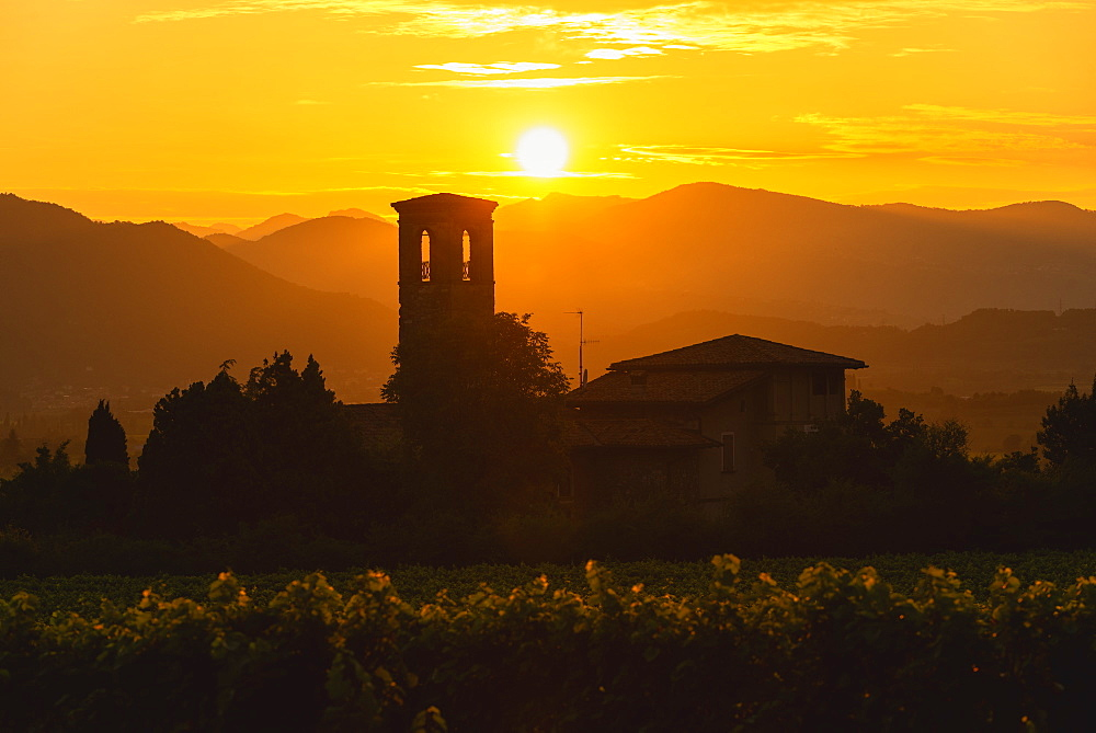 Franciacorta vineyards at sunset in Brescia province, Lombardy district, Italy. - 1299-109