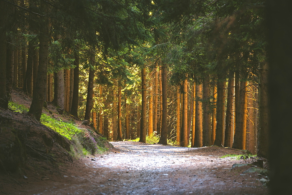 Along the path in the woods, Val Camonica, Brescia province, Lombardy, Italy, Europe