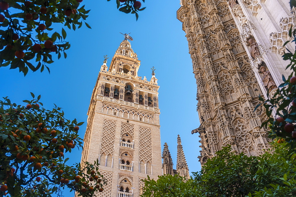 Cathedral of Seville and La Giralda, UNESCO World Heritage Site, Seville, Andalucia, Spain, Europe