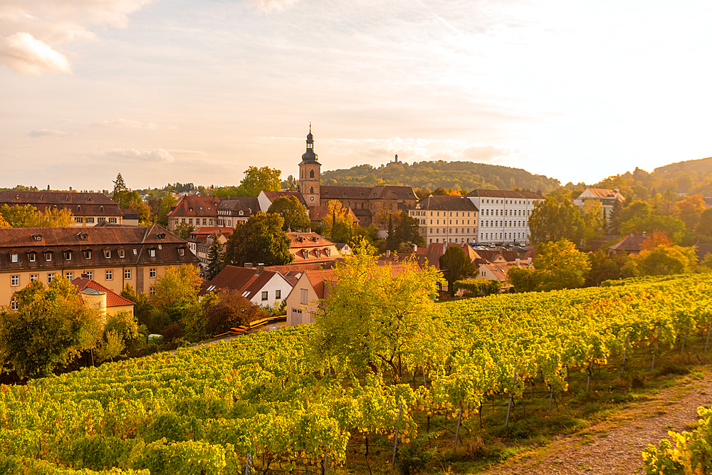 Wine fields by Altenburg, old fortress in Bamberg