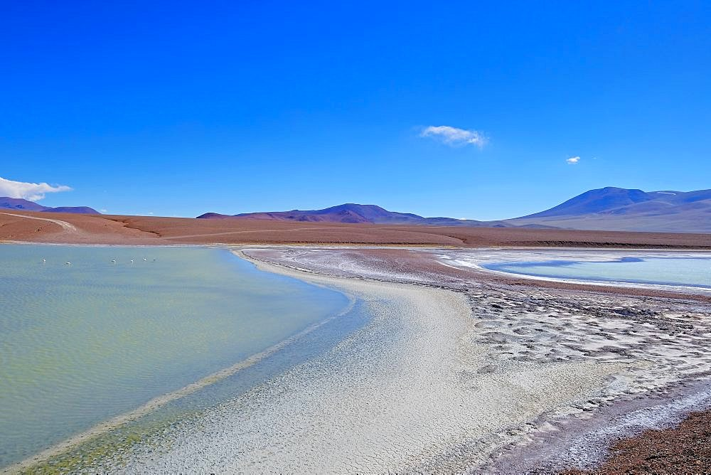 Lagoon Laguna Brava with flamingos near Paso Pircas Negras mountain pass, Argentina to Chile, La Rioja, South America