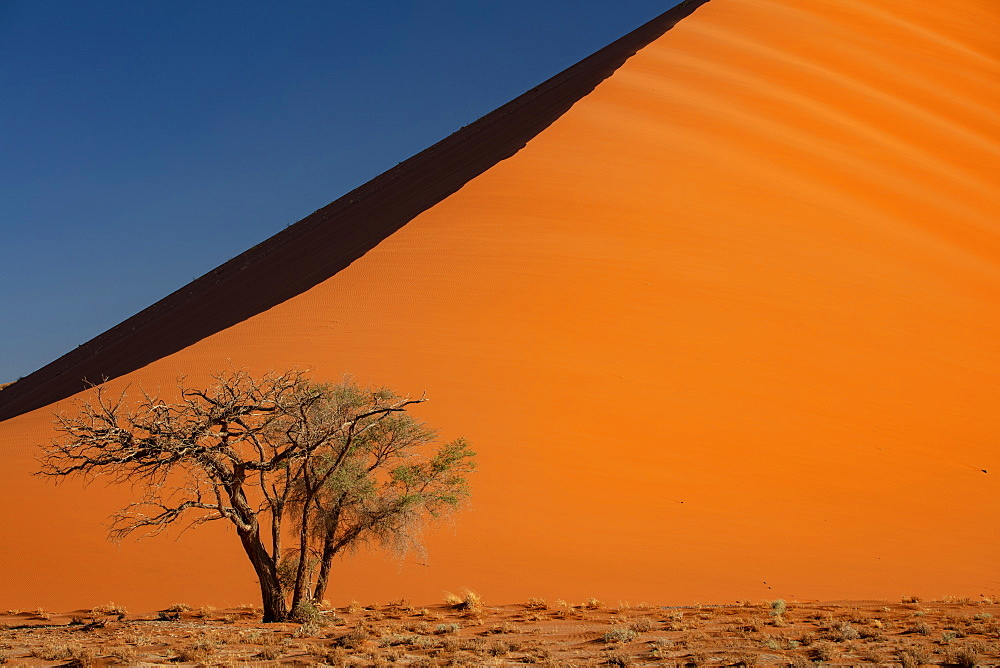 Sossusvlei National Park, sunset at Dune along the main highway to Deadvlei, Namibia, Africa - 1304-36