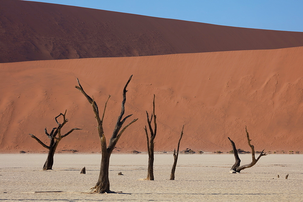 900 year old dead trees within Deadvlei amongst some of the highest dunes in the world, Sossusvlei, Namibia, Africa