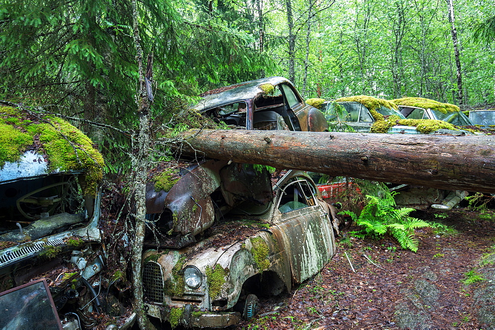 Bastnas Car Cemetery deep in the forests of the region of Varmland in Sweden, Scandinavia, Europe - 1304-67