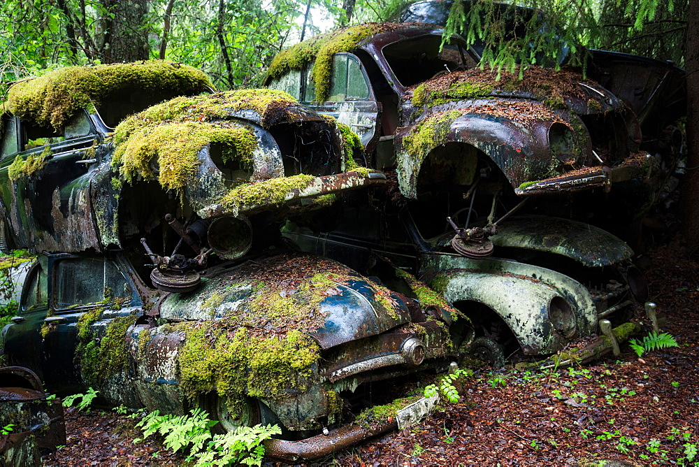 Bastnas Car Cemetery deep in the forests of the region of Varmland in Sweden, Scandinavia, Europe - 1304-68