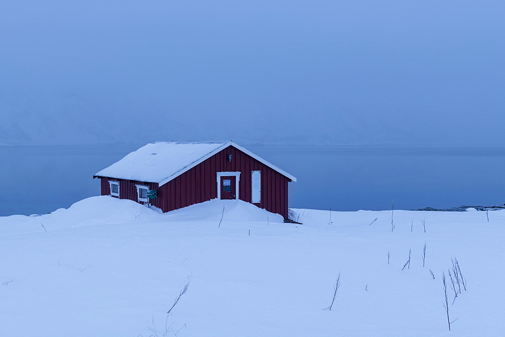 Red house partly buried in snow in winter scene on Lofoten Islands, Arctic, Norway, Europe