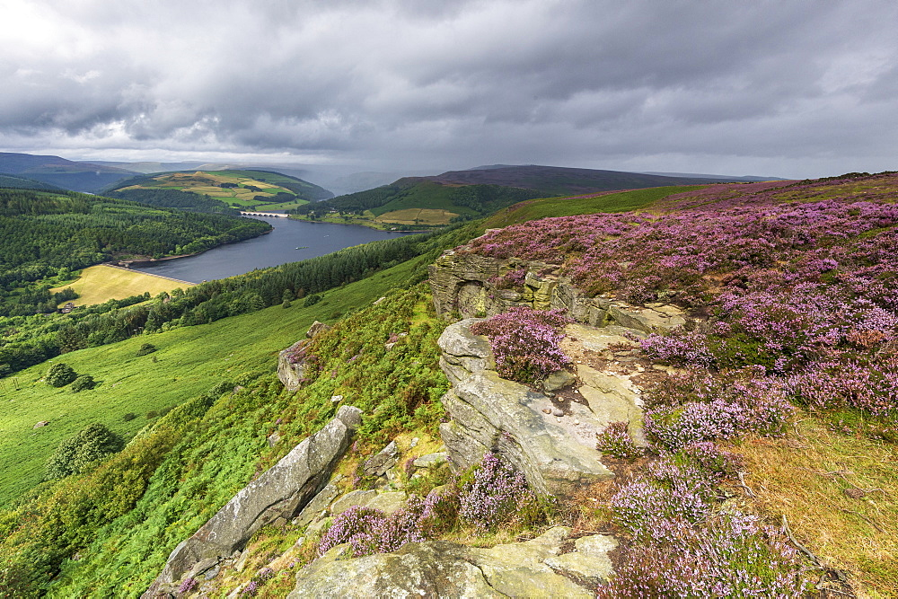 Bamford Edge with heather overlooking Ladybower reservoir, Bamford, Derbyshire, England, United Kingdom, Europe
