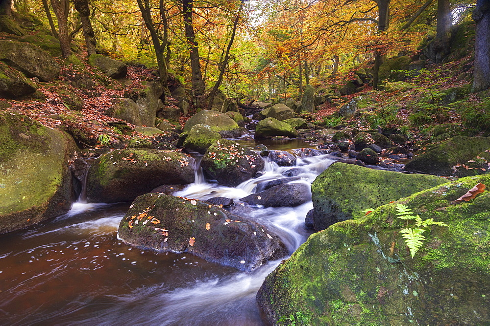 Flowing river and autumn colours at Padley Gorge, Peak District National Park, Derbyshire, England, United Kingdom, Europe - 1306-511