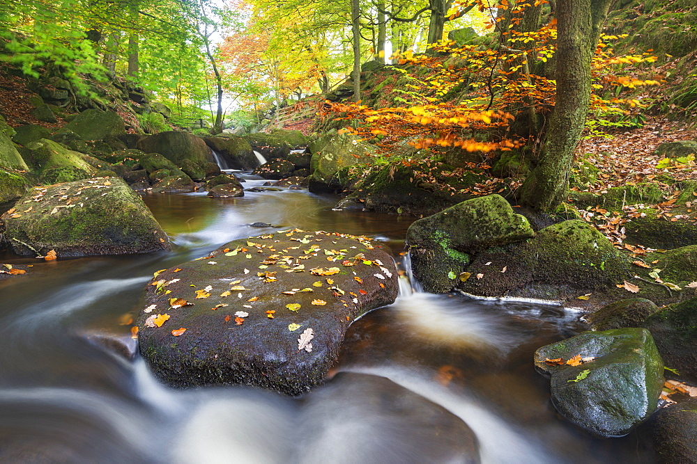 Padley Gorge in autumn, Peak District National Park, Derbyshire, England, United Kingdom, Europe