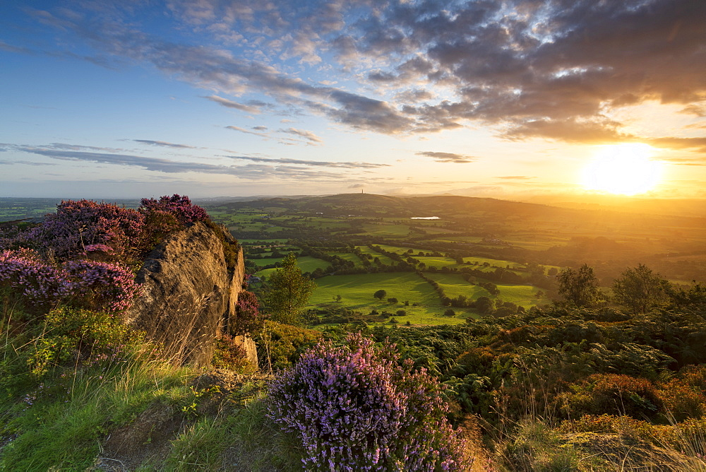 Sunrise with heather over Croker Hill and Macclesfield, Cheshire, England, United Kingdom, Europe