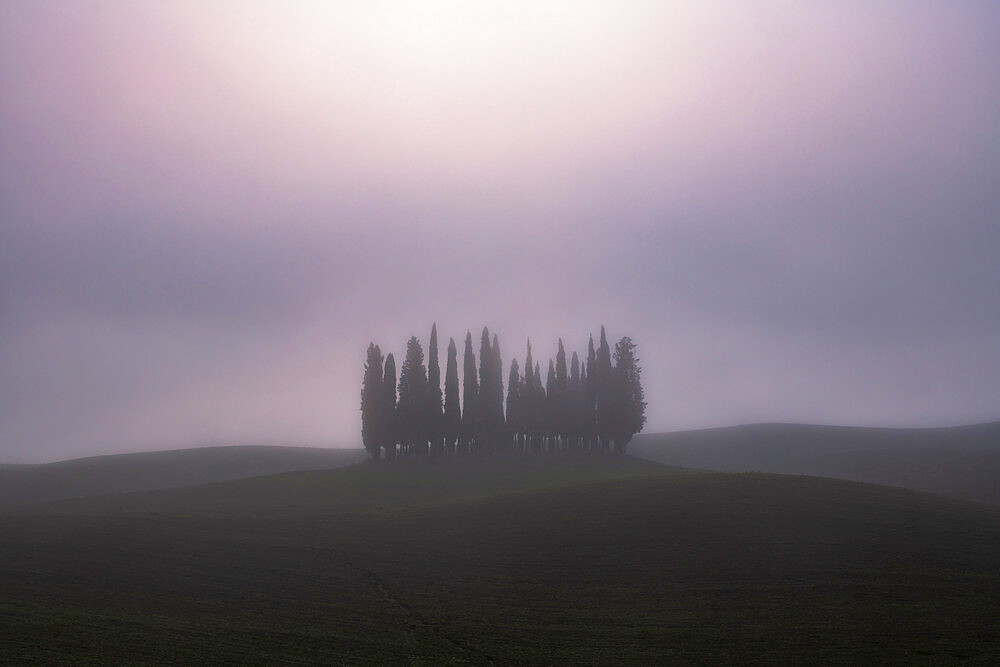 Copse of pencil pines shrouded with mist, San Quirico d'Orcia, Val d'Orcia, UNESCO World Heritage Site, Tuscany, Italy, Europe - 1306-690