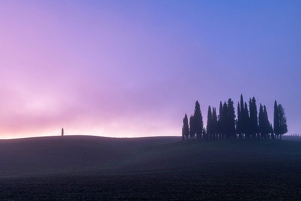 Copse of pencil pines with single tree with mist, San Quirico d'Orcia, Val d'Orcia, UNESCO World Heritage Site, Tuscany, Italy, Europe