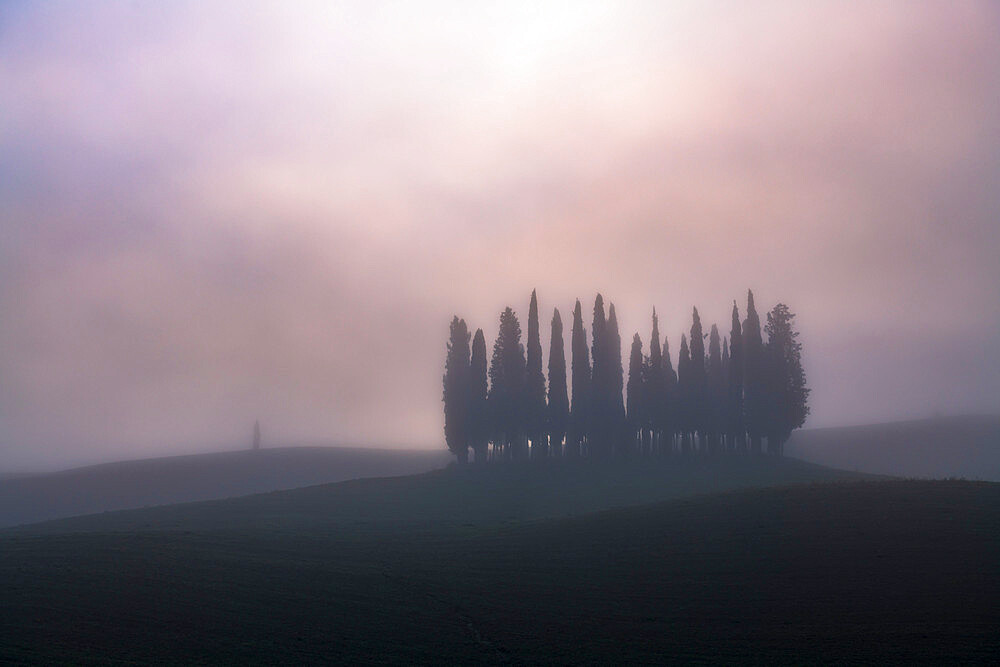 Copse of pencil pines in morning mist, San Quirico d'Orcia, Val d'Orcia, UNESCO World Heritage Site, Tuscany, Italy, Europe - 1306-694