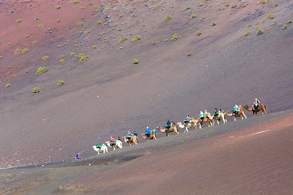 Tourist camel train in red volcanic landscape, Timanfaya National Park, Yaiza, Lanzarote, Las Palmas Province, Canary Islands, Spain, Atlantic, Europe