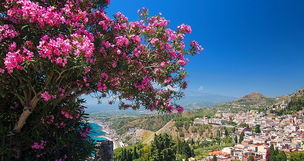 Panoramic view over the town from the Greek Theatre, pink oleander bush in foreground, Taormina, Messina, Sicily, Italy - 1310-179