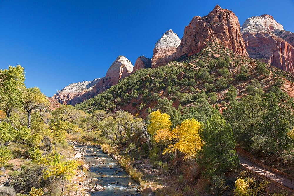 View along the Virgin River from Canyon Junction, autumn, golden cottonwood trees prominent, Zion National Park, Utah, United States of America, North America - 1310-201
