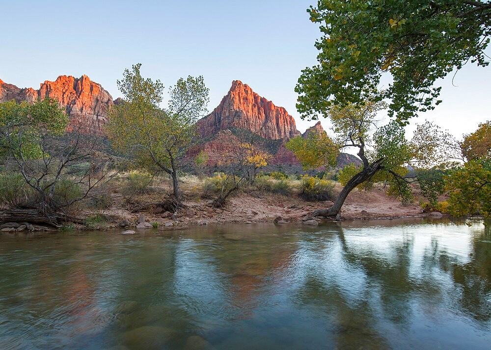 View from the Pa'rus Trail across the Virgin River to the Watchman at sunset, autumn, Zion National Park, Utah, United States of America, North America - 1310-204