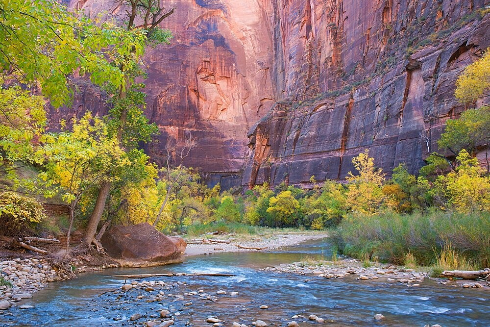 View across the Virgin River to the red sandstone cliffs of the Temple of Sinawava, autumn, Zion National Park, Utah, United States of America, North America - 1310-208