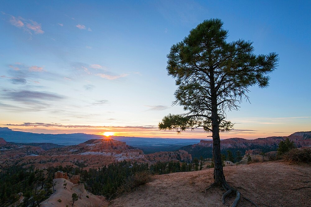 Pine tree on clifftop above the Queen's Garden near Sunrise Point, sunrise, Bryce Canyon National Park, Utah, United States of America, North America - 1310-218