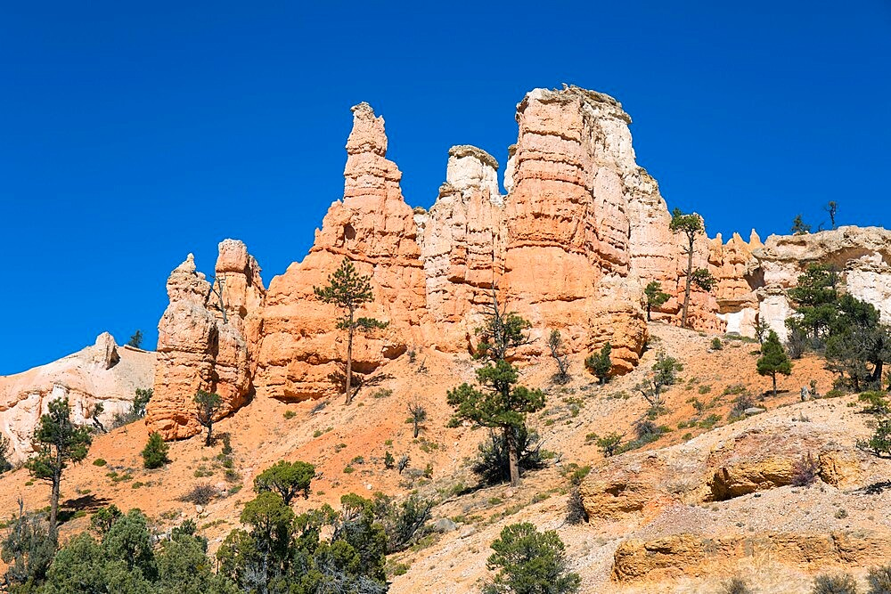 Typical rock hoodoos towering above the Mossy Cave Trail, Water Canyon, Bryce Canyon National Park, Utah, United States of America, North America - 1310-219