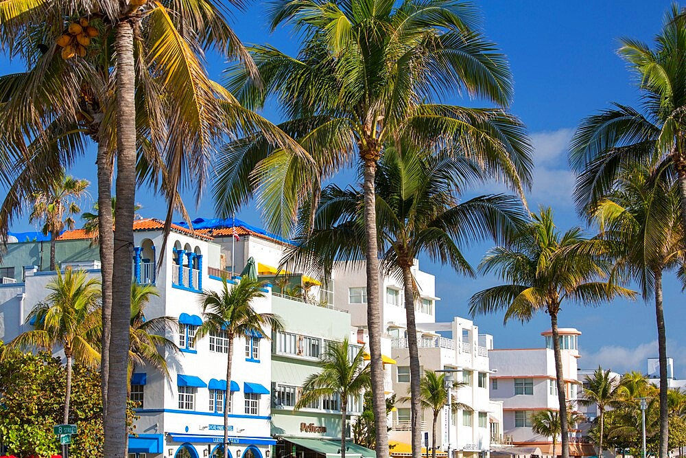 Colourful hotel facades and towering palm trees, Ocean Drive, Art Deco Historic District, South Beach, Miami Beach, Florida, USA - 1310-279