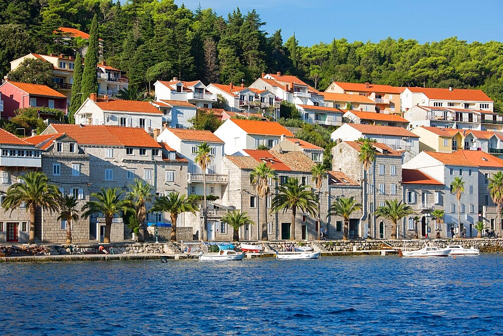 View across harbour to the palm-lined waterfront, Korcula Town, Korcula, Dubrovnik-Neretva, Dalmatia, Croatia, Europe