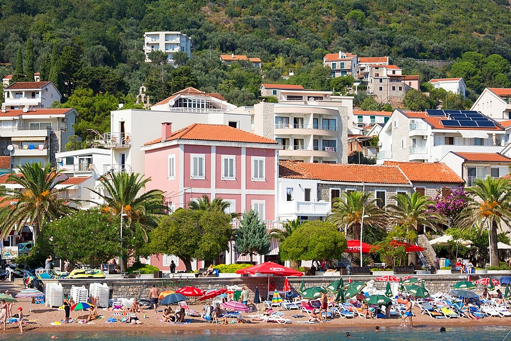 View to the town beach and colourful houses overlooking the palm-lined seafront promenade, Petrovac, Budva, Montenegro, Europe