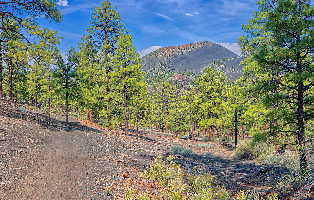 View of Sunset Crater Volcano from the east slope of the Lenox Crater Trail, the dark gray soil is volcanic pumice, Arizona, United States of America, North America
