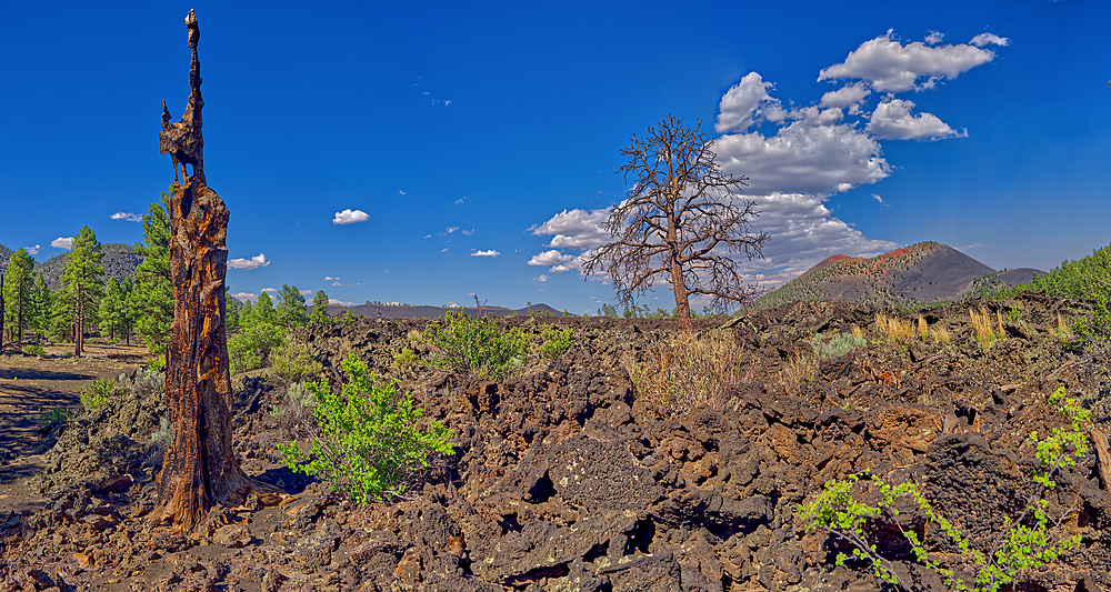 Burned out tree on the left with Sunset Crater Volcano in the background. Near Flagstaff AZ.