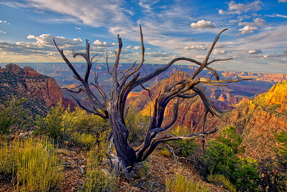 Grand Canyon view from the east slope of Buggeln Hill on the South Rim, Grand Canyon National Park, UNESCO World Heritage Site, Arizona, United States of America, North America - 1311-169