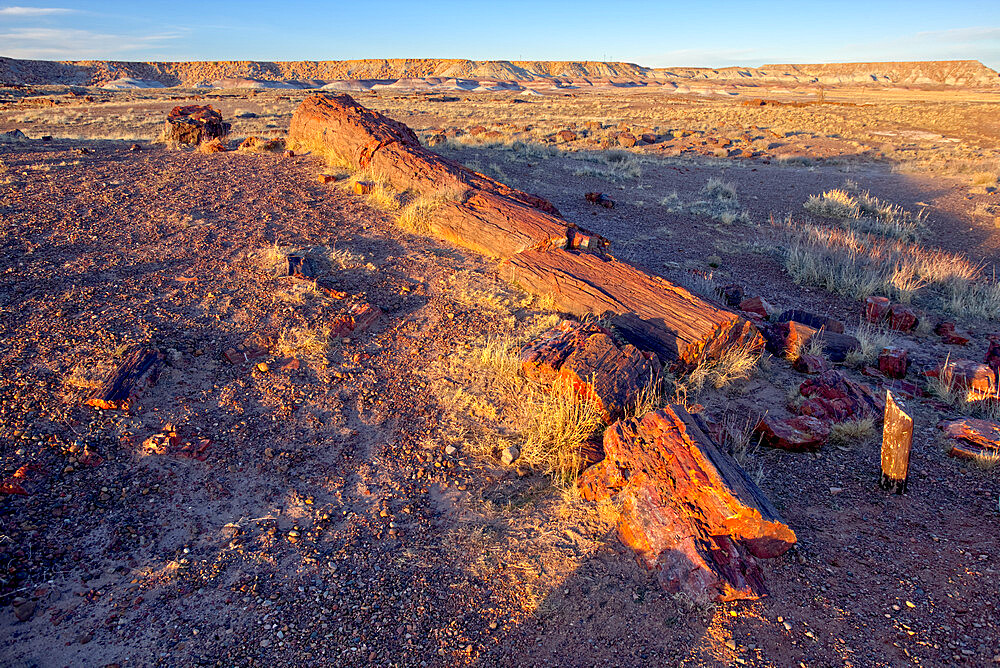 The Giant Petrified Logs of Petrified Forest National Park, located along a trail behind the Rainbow Museum, Arizona, United States of America, North America - 1311-193