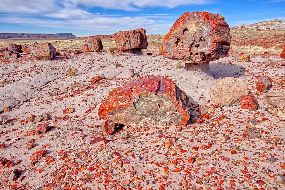 Shattered pieces of petrified wood in a sandy wash in the Jasper Forest of Petrified Forest National Park, Arizona, United States of America, North America - 1311-196