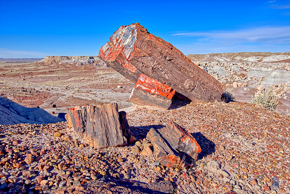 Large pieces of petrified wood in the Jasper Forest of Petrified Forest National Park, Arizona, United States of America, North America - 1311-202