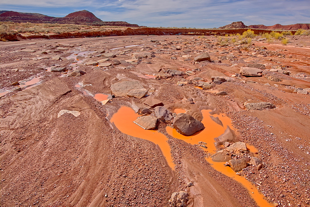 The Lithodendron Wash in the Petrified Forest National Park, Arizona, United States of America, North America