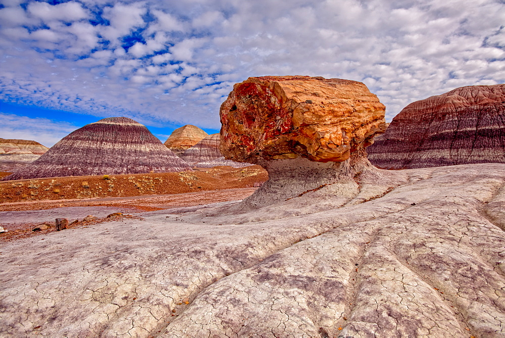 A large petrified log along the Blue Mesa Trail in Petrified Forest National Park, Arizona, United States of America, North America - 1311-217