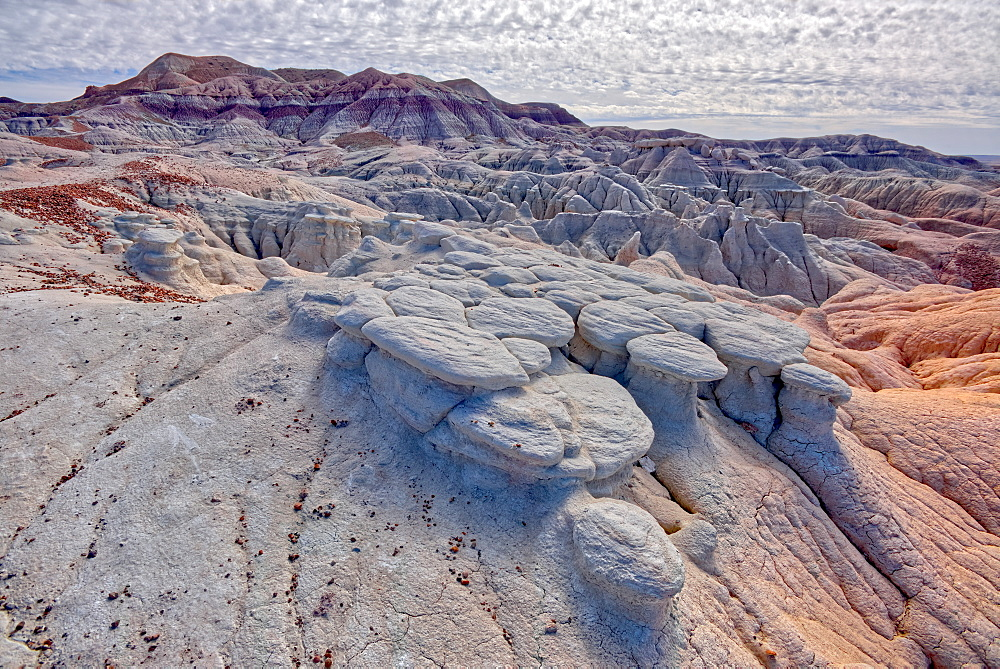 Mushroom shaped formations along the Blue Forest Trail in Petrified Forest National Park, Arizona, United States of America, North America