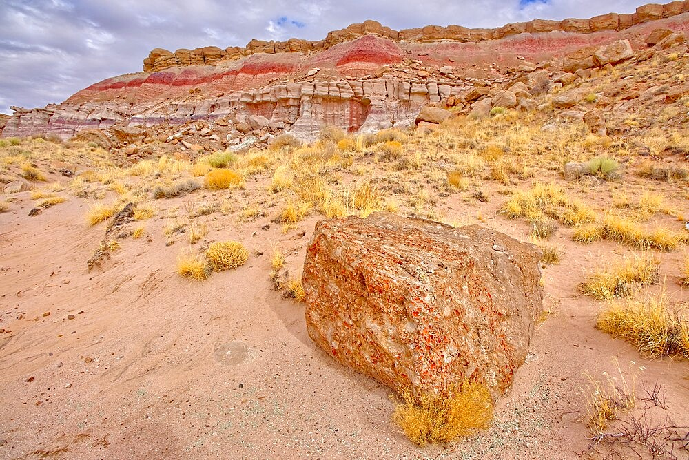 One of many fossil filled boulders in the Clam Beds along Red Basin Trail in Petrified Forest National Park, Arizona, United States of America, North America - 1311-286