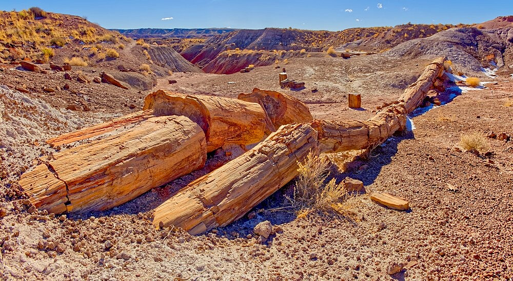 One of the few petrified trees almost intact, The Onyx Bridge in Petrified Forest National Park, Arizona, United States of America, North America - 1311-298