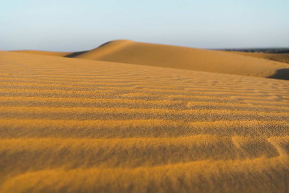 Sand dunes in the Thar Desert, Jaisalmer, Rajasthan, India, Asia - 1313-9