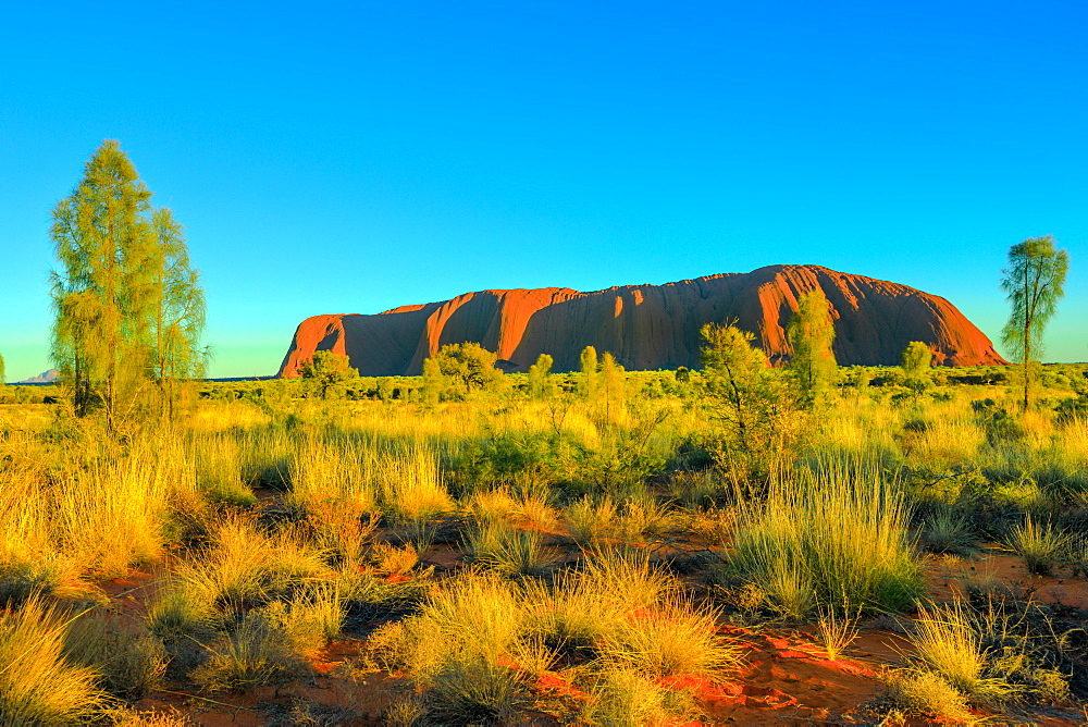 Beautiful landscape of huge Ayers Rock monolith from Talinguru Nyakunytjaku sunrise viewing area in Uluru-Kata Tjuta National Park, Australia, Northern Territory. Aboriginal land. Australian outback.