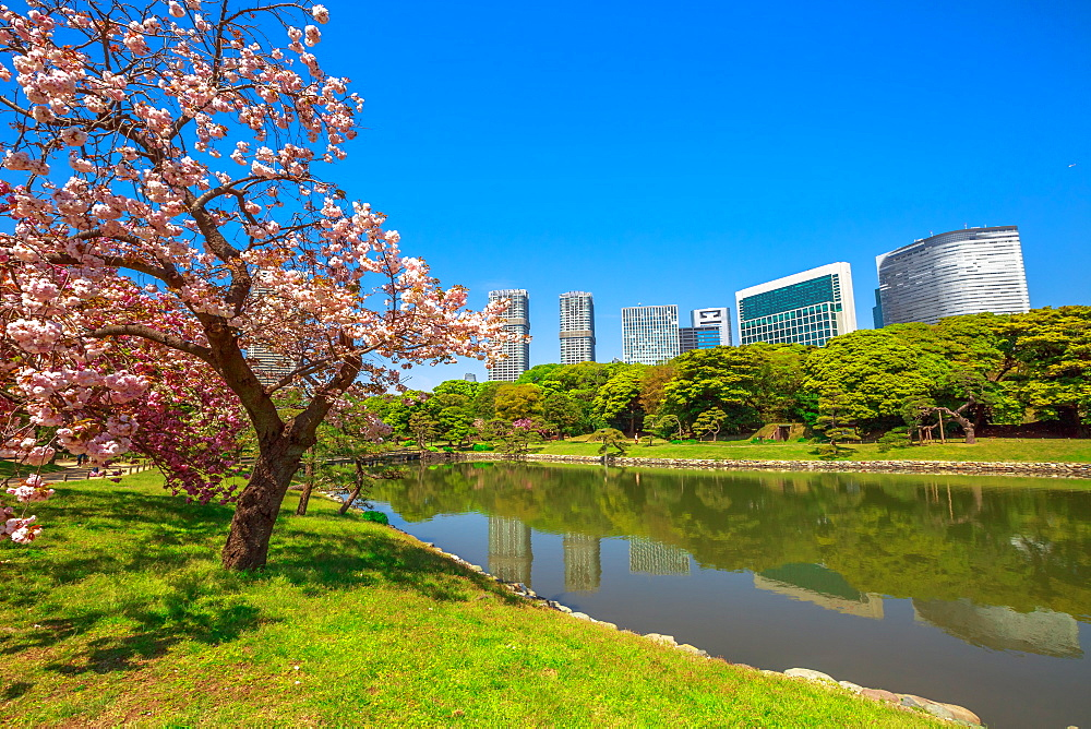 Modern skyscrapers of Shiodome in Shimbashi district reflected in Hamarikyu (Hama Rikyu) Gardens lake, Chuo district, Sumida River, Tokyo, Japan, Asia